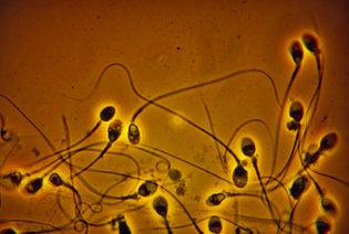 西洋人男性の精子数は1973年以来50%以上減少している!?The New York Timesより