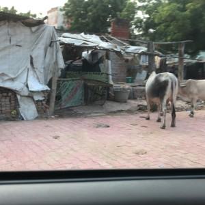 インドで10大ビックリ!&ひとり旅注意点
