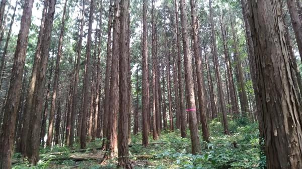 立っている木を切り倒す 木こり体験しませんか?