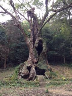 樹齢3000年  あってきました